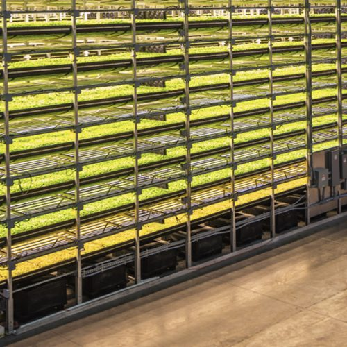 [AgriFood Innovation] Vertical Farming Ideas Take Root at Dutch Conference