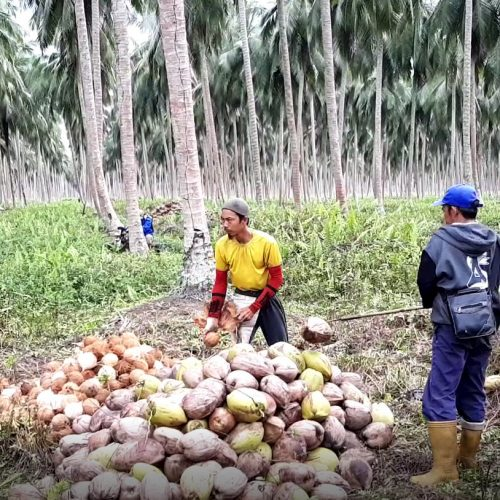 VIDEO. The World's First Coconut Congress