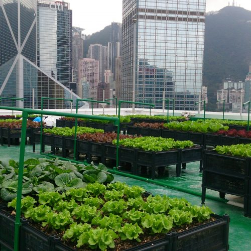 The Latest on Rooftop Farms in Cities