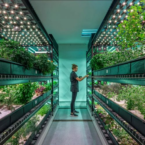 Urban Farming: Strategies for a Greener Future