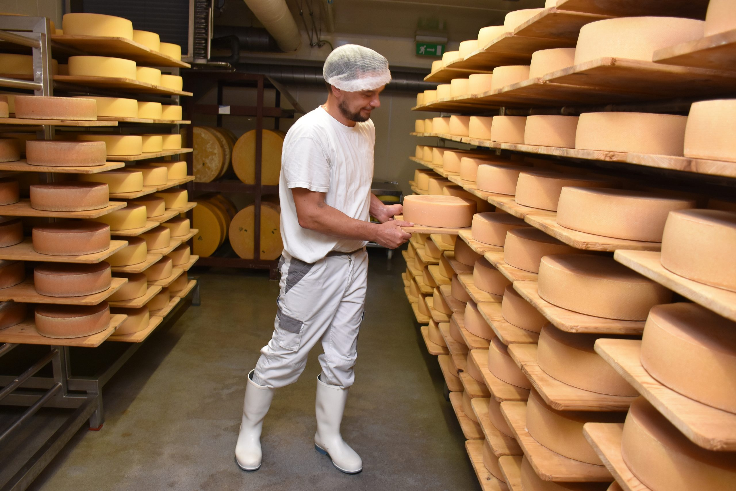 Swiss Cheese Craving Keeps Dairy Industry Alive